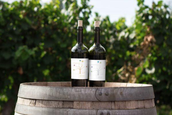 vini delle cantine antigu